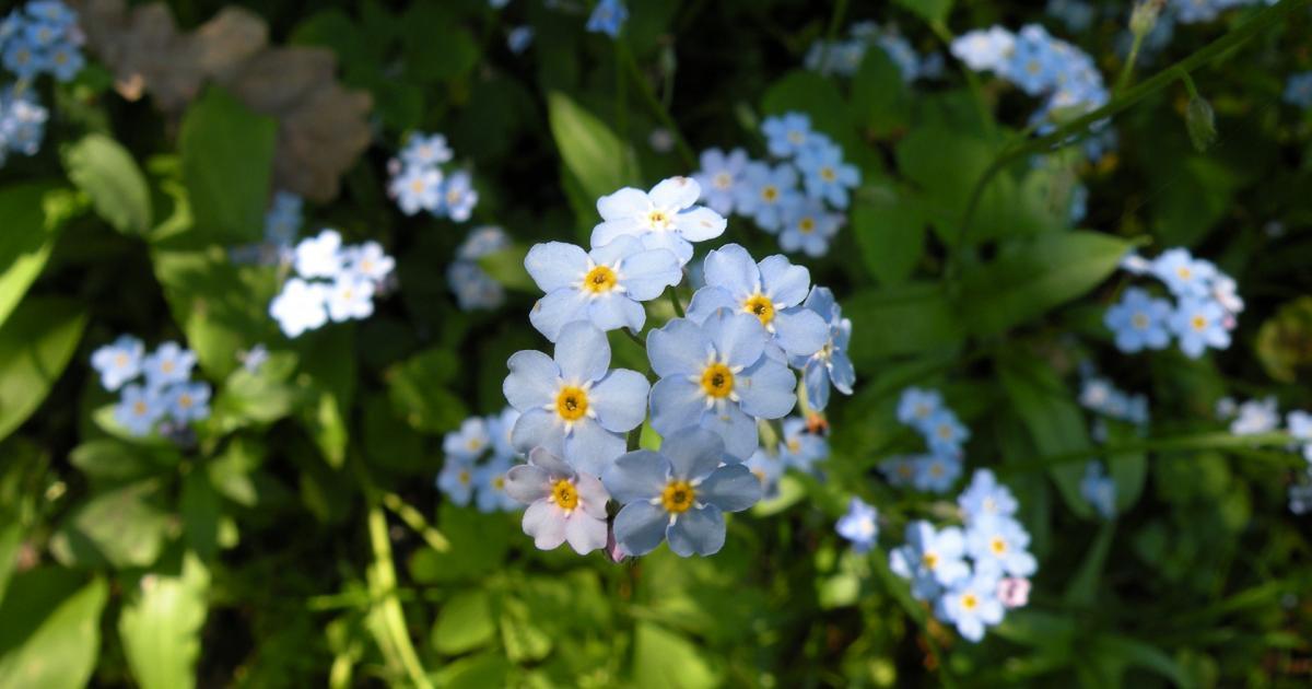 Flower Garden in Unmapped